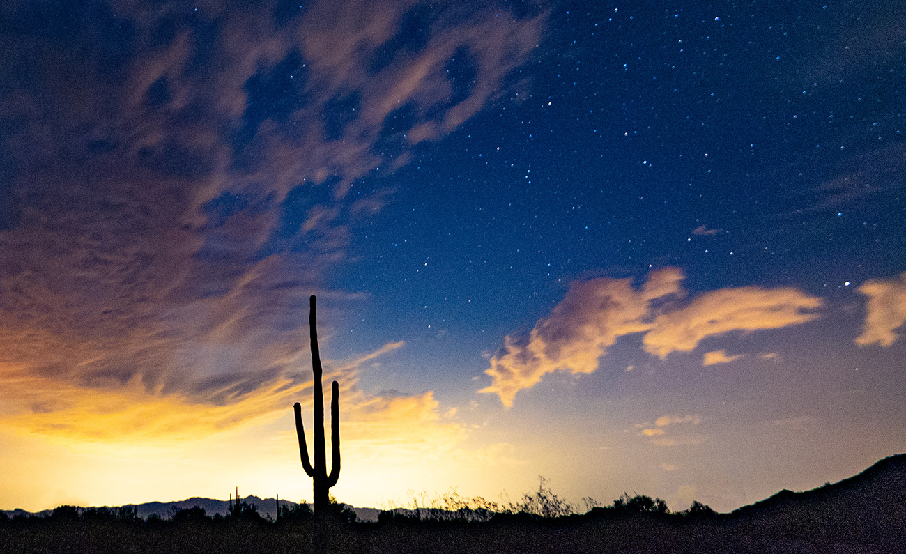 Desert sunset with deep blue sky and silhouette of saguaro cactus